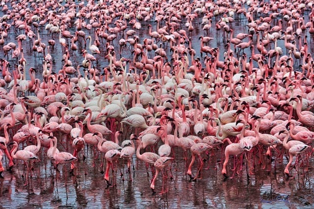 Flamingos in Namibia
